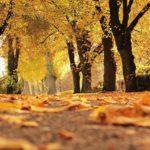 Auch der Herbst hat schöne Tage!